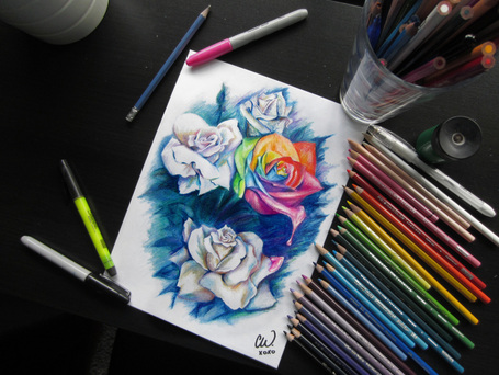 Rainbow rose clayton wadsworth rainbow roses pencil crayon portrait
